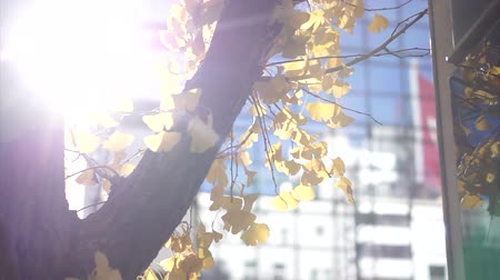castanha : Autumn Yellow Leaves Tree In Sun Flare City Buildings Hd