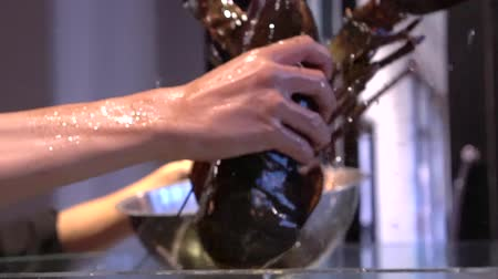 naživu : Hands Pick Fresh Canadian Lobster In Restaurant Tank For Cooking