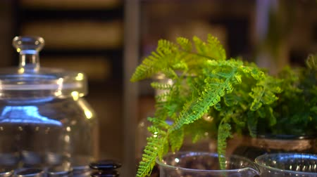 ferns : Fern and glass jar urban disply garden decoration
