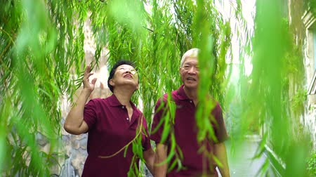 söğüt : Asian old couple holding hand walking through green willow tree happy together Stok Video