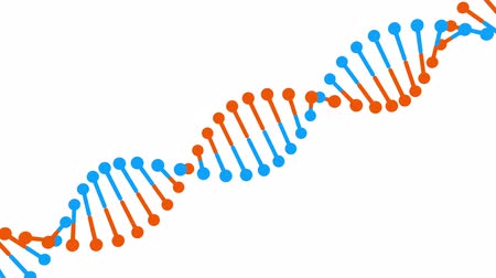 Rotating blue-orange DNA molecule on white background. 3D rendered loopable animation. Genetics concept.