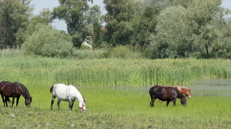ouvido : herd of horses in pasture