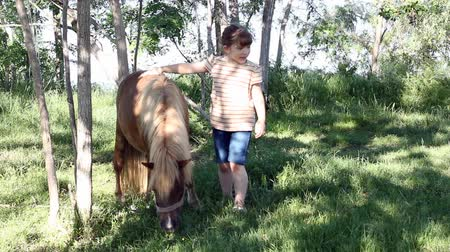 poník : little girl with pony horse