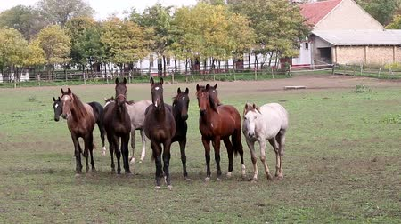 nações : herd of  horses on farm agriculture
