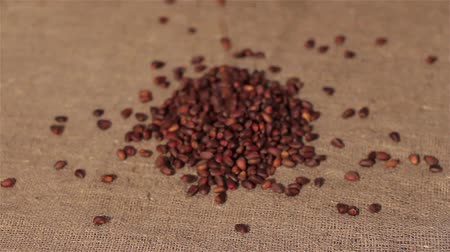 peixe : Pine nuts spilling on burlap. harvesting. focusing
