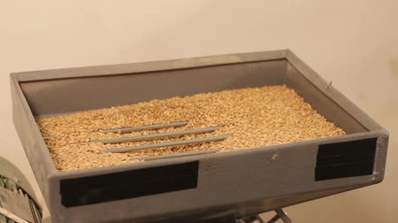 preslenmiş : Grinding of malt for producing beer at the brewery. electric mill
