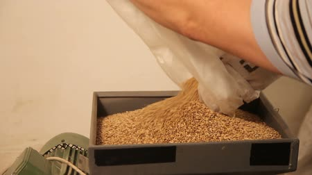 preslenmiş : Grinding of malt for producing beer at the brewery. The crushing of the malt in an electric mill.