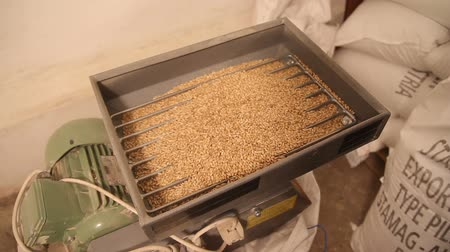 mashing : Add malt to grind out of the bag to the mill. Grinding of malt for producing beer at the brewery.