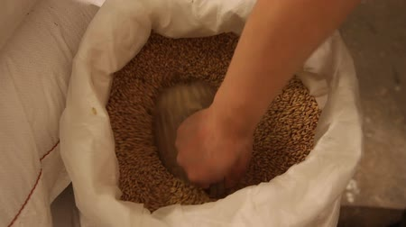 mashing : Male hands measuring containers are gaining the malt out of the bag. Grinding of malt for producing beer at the brewery. Stock Footage