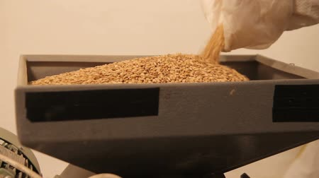 pivovar : Add malt to grind out of the bag to the mill. Grinding of malt for producing beer at the brewery.
