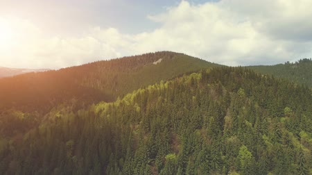 bald mountain : 4K Aerial Drone Footage View: Flight over mountain forest with traces of deforestation. The theme of ecology and environmental protection. Carpathian Mountains, Ukraine, Europe. Beauty world. Stock Footage