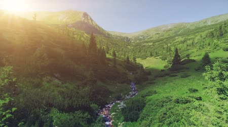 steady cam : Aerial Drone View: majestic mountain landscape. Green valley with pine tree forest and curve river in sunset orange light. Nature, travel, hiking. Carpathian mountains, Ukraine, Europe. 4K motion