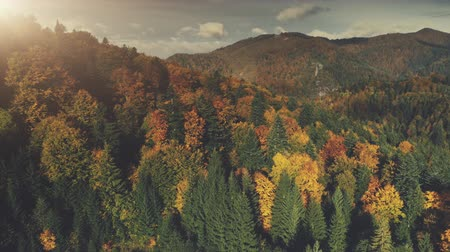 Majestic Mount Nature Forest Scenery Aerial View. Colorful Tree Hill Slope Wildlife Dense Wood Scene Overview. Long Rural Countryside Road Overcast Sky Travel Concept Drone Flight Footage 4K (UHD)