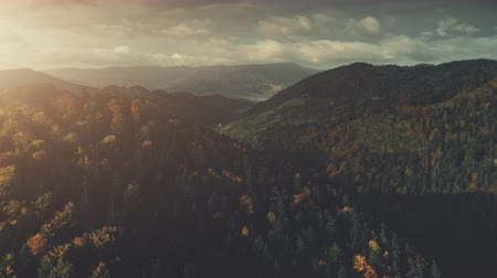 Dense Forest Mountainous Land Scenery Aerial View. Overcast Horizon Cloud Sky Wildlife Rocky Landscape Panoramic Overview. Epic Mount Nature Scene Thick Wild Forest Drone Flight Footage 4K (UHD)
