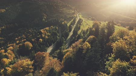 Autumn Sunset Mountain Dense Forest Landscape Aerial View. Multicolored Hill Tree Wood Highland Nature Scenery Overview. Curved Country Road Vacation Holiday Concept Drone Flight Footage 4K (UHD)
