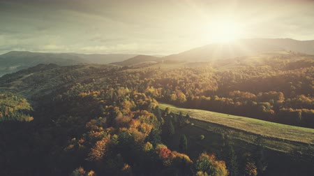 Panoramic Sunset Mountain Forest Slope Scenery Aerial View. Evergreen Deep Wood Tree Highland Landscape Overview. Colored Wildlife Forestry Eco Friendly Environment Concept Drone Flight Footage 4K UHD
