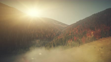 Colorful Highland Scenery Mist Weather Aerial View. Mountain Evergreen Forest Slope Misty Coniferous Landscape Sight. Soft Sunlight Eco Friendly Environment Concept Drone Flight Footage 4K (UHD)