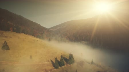 Mountain Slope Landscape Mist Weather Aerial View. Highland Scenery Wildlife Habitat Colorful Fir Forest Overview. Thick Foggy Canyon Sight Clean Ecology Concept Drone Flight Footage 4K (UHD)