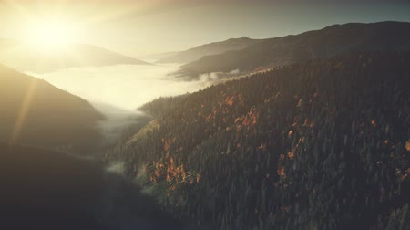 Majestic Mountain Slope Surface Haze Aerial View. Highland Wildlife Habitat Tranquil Location Coniferous Forest Scenery. Foggy Weather Scene Clean Ecology Concept Drone Flight Footage 4K (UHD) Vídeos