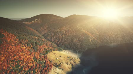 Sunrise High Mountain Forest Slope Aerial View. Sunny Colorful Highland Wood Wild Nature Habitat Overview. Foggy Ravine Scenery Coniferous Tree Clean Ecology Concept Drone Flight Footage 4K (UHD) Vídeos