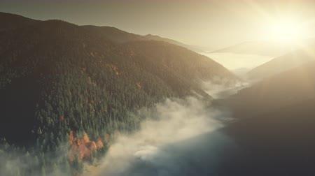 Misty Mountain Coniferous Forest Slope Aerial View. Fir Tree Wood Foggy Wild Nature Landscape Overview. Pine Forestry Highland Valley Eco Friendly Environment Concept Drone Flight Footage 4K (UHD)