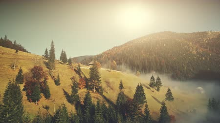 Sunny Autumn Mountainous Landscape Aerial View. Fir Forest Hill Slope Surface Wild Nature Scenery. Thick Fog Ravine Wooden Hut Mountain Meadow Natural Environment Concept Drone Flight Footage 4K (UHD) Vídeos