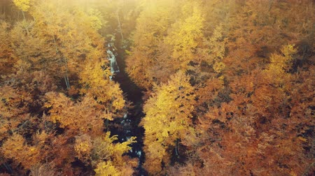 meditující : Golden Autumn Forest Creek Scenery Aerial View. Wild Nature Wood Landscape long River Flow Overview. Yellow Tree Foliage Sight Eco Friendly Environment Concept Top Down Drone Flight Footage 4K (UHD)