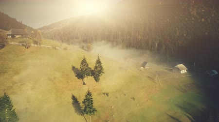 Steep mountain wildlife forest slope aerial view. Fir Tree Wood Foggy Wild Nature Landscape Overview. Pine Forestry Highland Valley Eco Friendly Environment Concept Drone Flight Footage 4K (UHD)