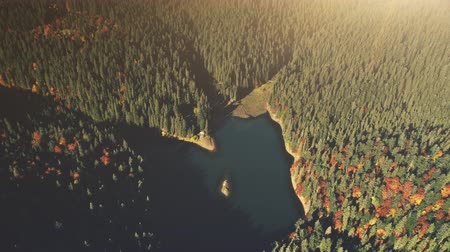 High Mountain Lake Sunrise Wood Scene Aerial View. Dense Coniferous Forest Wildlife Habitat Landscape. Sunlight Beam Tranquil Hill Slope Natural Environment Concept Drone Flight Footage 4K (UHD)