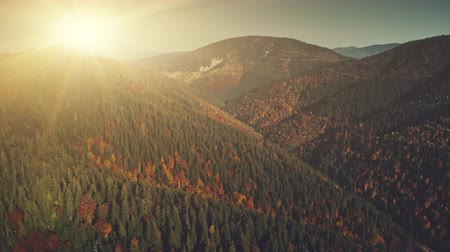 Multicolored Hill Chain Peak Sun Beam Aerial View. Highland Coniferous Forestry Sunrise Sight Overview. Wildlife Fir Tree Wood Mountain Cliff Clean Ecology Concept Drone Flight Footage 4K (UHD) Vídeos