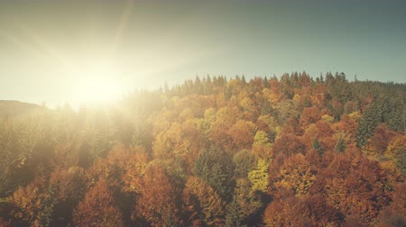 de faia : Colorful Mountain Forest Top Sight Aerial View. Wildlife Habitat Highland Peak Forestry Flare Sun Beam. Epic Beech Tree Wood Slope Surface Natural Environment Concept Drone Flight Footage 4K (UHD)