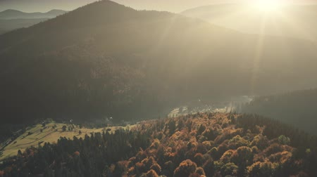 Highland Foggy Valley Sunrise Sight Aerial View. Mountain Slope Thick Dense Wood Wildlife Coniferous Nature Scenery Overview. Soft Sunlight Beam Clean Ecology Concept Drone Flight Footage 4K (UHD)