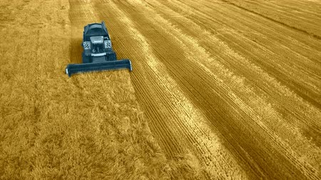 médio : Modern harvest velhice combine tractor harvester harvests crops in the field, aerial fly top vew, design, abstract, with mask to coloration. Stock Footage