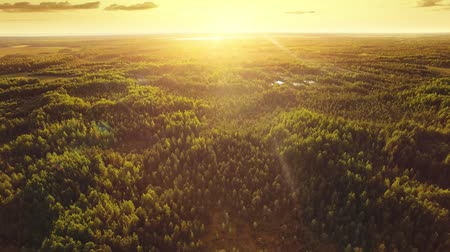 tlen : Aerial ecological forest sunset beautiful shot. Ideal background for forest conservation, save biology and nature, ecology theme. Global warming and forest fire theme.