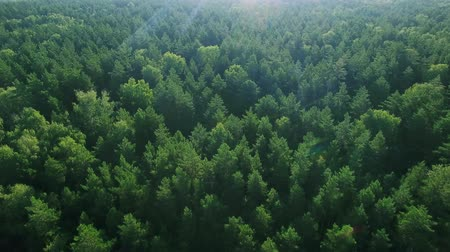 tlen : Aerial ecological green rainforests forest morning beautiful shot. Ideal background for forest conservation, save biology and nature, ecology theme. Global warming and forest fire theme.