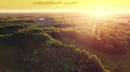 tlen : Aerial ecological forest sunset beautiful panorama shot. Ideal background for forest conservation, save biology and nature, ecology theme. Global warming and forest fire theme.