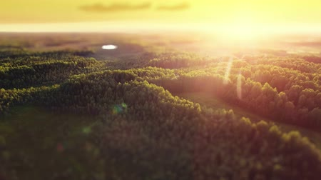tlen : Aerial ecological forest sunset defocus beautiful panorama shot. Ideal background for forest conservation, save biology and nature, ecology theme. Global warming and forest fire theme.