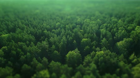 tlen : Aerial ecological green rainforests defocus forest morning beautiful shot. Ideal background for forest conservation, save biology and nature, ecology theme. Global warming and forest fire theme.