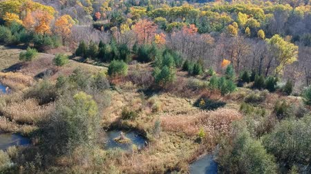 swamps : Aerial view seasonal autumn forest in color. Flying over the beautiful forest trees and small swamp lakes. Eye bird camera footage. Stock Footage