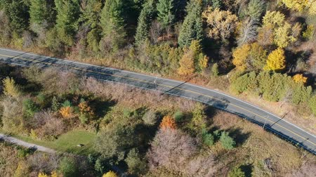 asfalt : Top view of the empty asphalt road in the middle of the forest. American fall season nature at very bright sunny day. Wideo