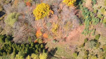 napfény : Aerial flying above the stunning colorful trees at fall on sunny day. Beautiful autumn trees in brown and yellow colour. Fall foliage in autumn forest. Stock mozgókép