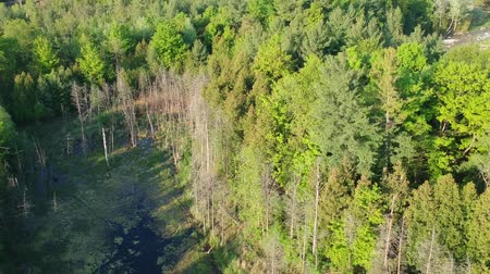 yemyeşil bitki örtüsü : Aerial flying over a beautiful green forest in a rural landscape. America. Stok Video