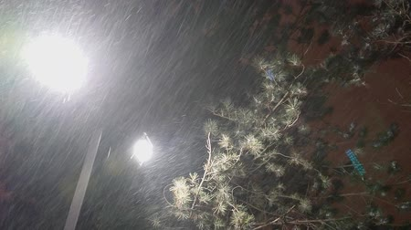 lampy : Night winter street lamp or lantern exposing extreme wind gust and falling snow under fir tree.