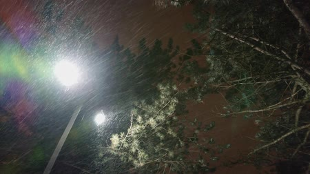gust of wind : Night winter street lamp or lantern exposing extreme wind gust and falling snow under fir tree.