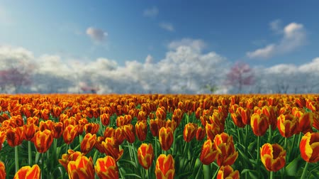 голландский : Group of orange, red tulips against the sky. Spring landscape. Blurring background.