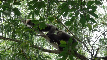 pień : Two loving monkeys on the tree in the jungle of Sri Lanka