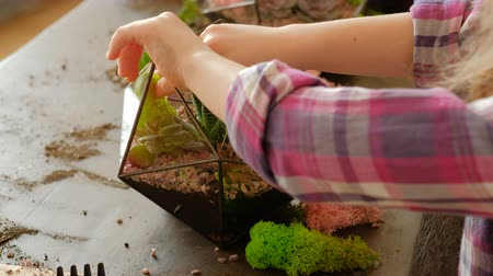 nedvdús : DIY florarium. Hobby and leisure. Natural handmade gift idea. Girl using moss to decorate succulent arrangement in glass vase.