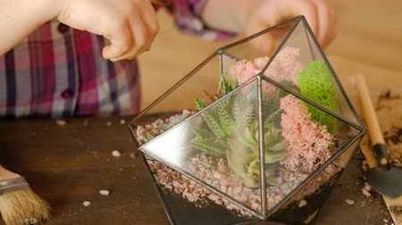 kelp : DIY florarium. Modern kids hobby club. Handmade floral design. Girl using moss to complete succulent arrangement in glass vase. Stock Footage