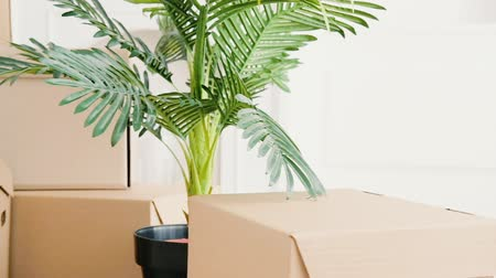 coisas : Moving home. New life start. Changing accommodation. Unpacked personal stuff, green plant in modern light room.