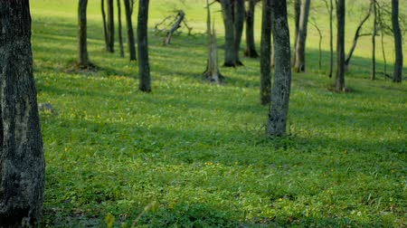 abundante : Flowering forest. Lush and abundant meadow with spring bloom and green foliage.